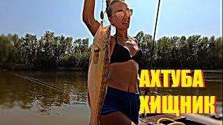 Рыбалка на ахтубе - окунь