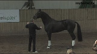 preview picture of video 'DV/DSP Hingsteshow 2008 Øst - Del 1'