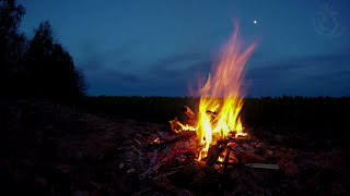 🔥 Campfire Ambience With Night Animals Such As Owls And Crickets. Made For Relaxation & Sleep, Enjoy