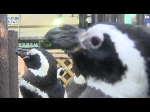 ペンギン舎も年末の大掃除