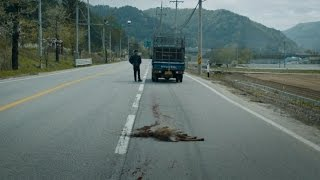 Фермер сбивает заражённого оленя на дороге Поезд в Пусан