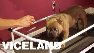 Trappy's Doggie Treadmill