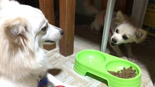 Two Dogs Having An Argument And Fighting Over Dog Food | Dog Videos
