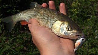 Рыбалка на горных речках краснодарского края