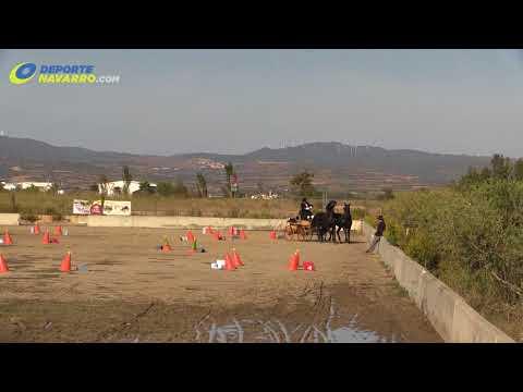 Campeonato navarro de enganches Olite 2017 8
