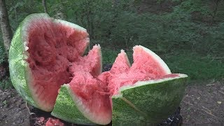 What Is the Best Caliber for Exploding Watermelons?