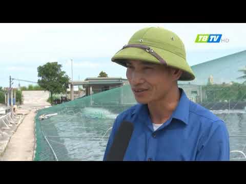 Công nghệ nuôi tôm ở Thái Thượng, huyện Thái Thụy