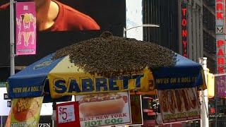 40.000 Bienen am Times Square