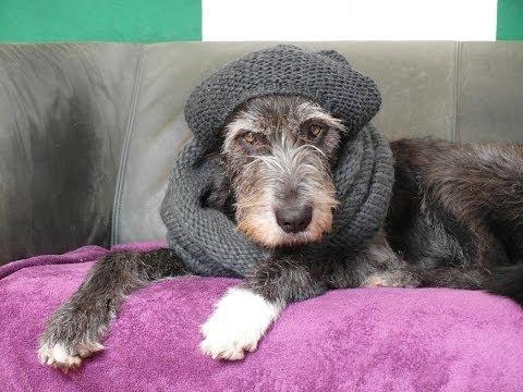 Mit dem Hund durch den Winter + erste Hilfe gegen Erbrechen und Durchfall