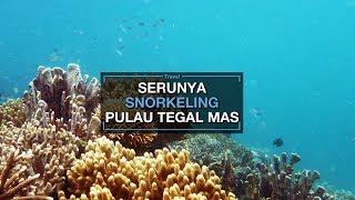 Serunya Snorkeling di Pulau Tegal Mas, Ada Spot Menarik yang Belum Banyak Orang Tahu