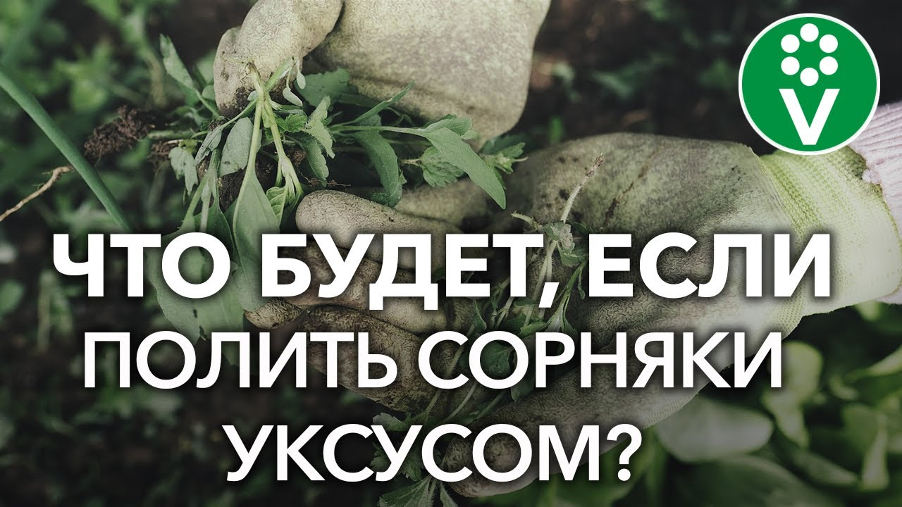 Как уничтожить сорняки? Проверяем популярные рецепты из интернета