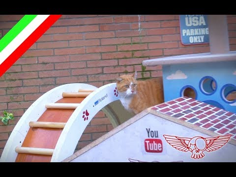 Come costruire un gioco meraviglioso (tapis roulant) per gatti - ep 02 - Roland Master Maker