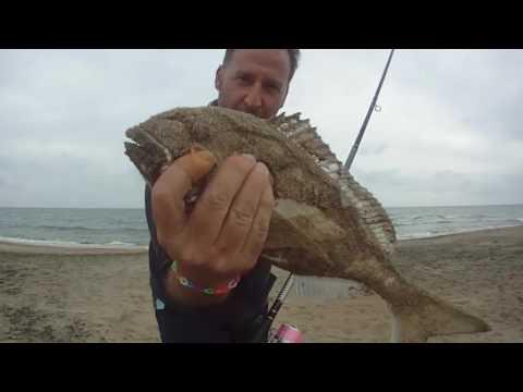 La pesca da un muso che si nutre su