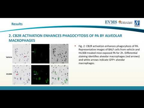 Thumbnail image of video presentation for Examining the role of cannabinoid-2 receptor activation in bacterial clearance