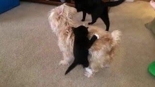 animale caini si pisica