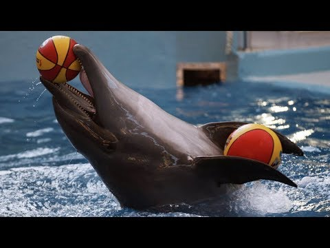 Лазаревское 2017 | Дельфинарий Морская Звезда | Вечернее шоу