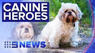 Dogs save woman from sex attacker in Melbourne cemetery | Nine News Australia