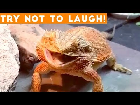 Try Not To Laugh Funniest Animal Compilation December 2018 | Funny Pet Videos
