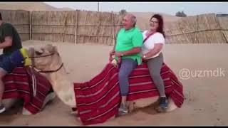 Верблюд перегруз )) клип прикол