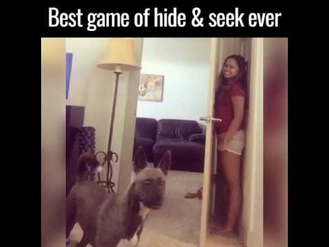 Super Funny Hide & Seek Game DOG Vs GIRL