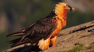 10 Aves Más Peligrosas Que No Creerás Que Existen