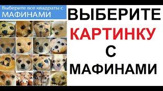 По вопросам сотрудничества: maxmaximov@wildjam.ru
