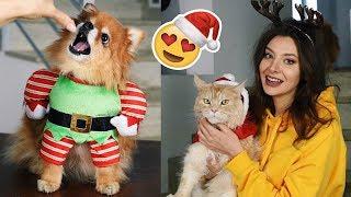 Świąteczne przebrania dla kotów i psa! 🎅🎄
