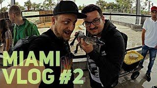 DEEP IN THE JUNGLE   Miami VLOG #2