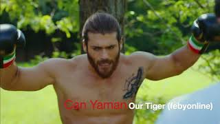 Can Yaman   Our Tiger
