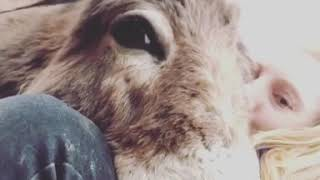 Donkey video - Donkey Raja beautiful video - Animal's video