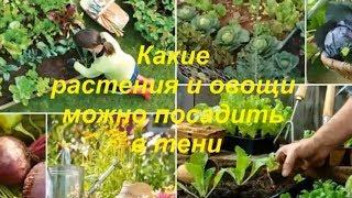 Какие овощные культуры можно посадить в тени