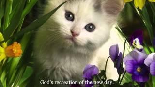 Cat Stevens - 'Morning Has Broken' Lyrics on screen