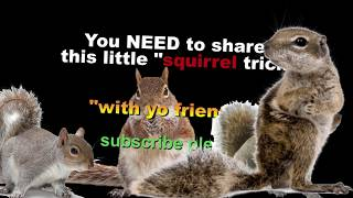 """80 Artist goals of $ money and fame WITH squirrels. """"Walk to the door"""" episode 69.  (LOVED"""