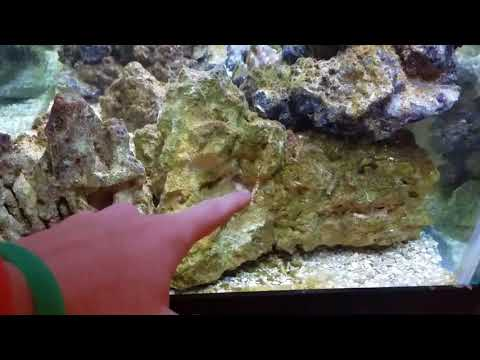 Benthic is boring!!! | saltwater re-aquascape