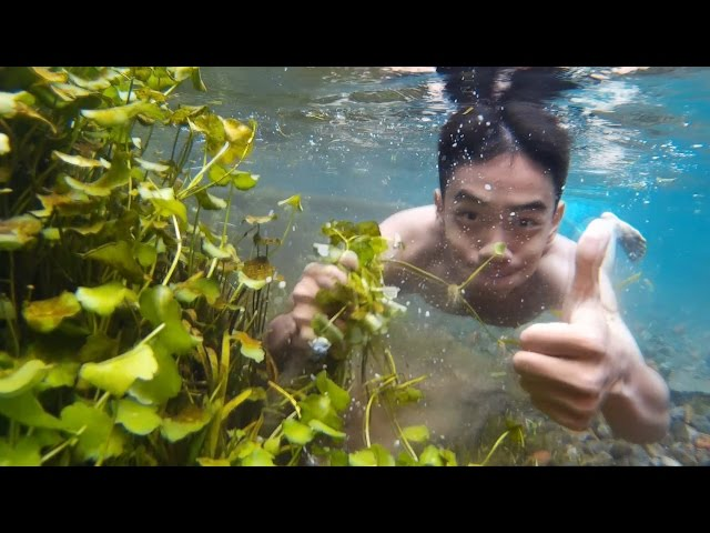 Mencari Tanaman Aquascape Di Alam