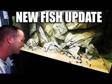 NEW FISH UPDATE
