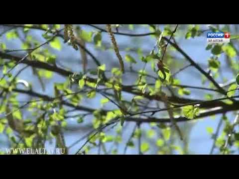 Катунский биосферный заповедник проводит просветительскую акцию (2017)