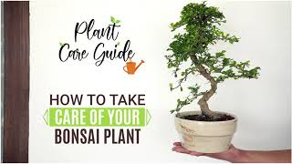 How to take Care of your Bonsai plant    Plant Care Guide