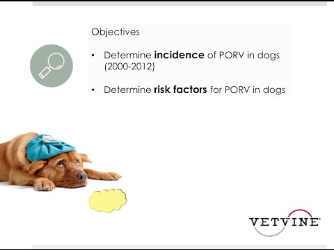 Postoperative Regurgitation And Vomiting In Dogs - The Roundtable Discussion
