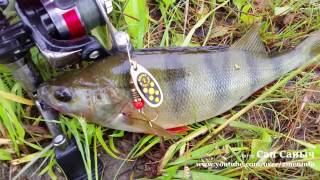 Рыбалка на окуня с вертушками