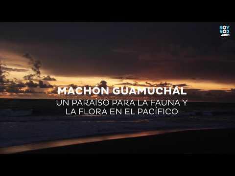 Manchón Guamuchal, un paraíso para la fauna y la flora en el Pacífico