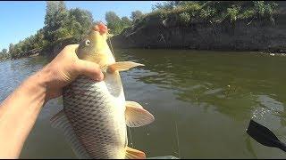 Рыбалка на сазана волгоградская область