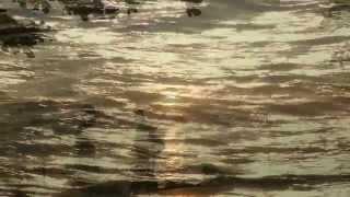 Video LIQUID SOUND