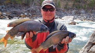 Рыбалка на огромного хариуса в сибирского