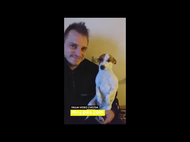 Strela – Video natečaj 2020 – Revija Moj Pes #Strela #MojPes
