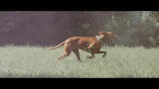 Geloren Ha Гелорен 30шт. от компании MY PET - видео