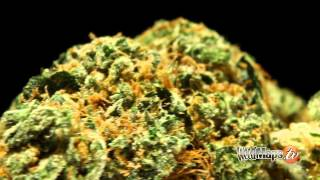 Marihuana Sorten 2012 Strain Review