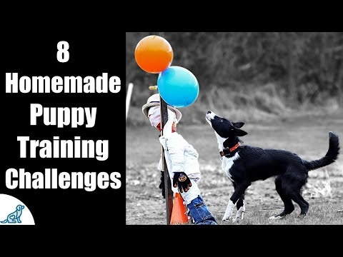 DIY Puppy Training Obstacle Course For Socialization - YouTube