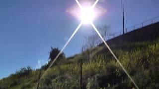 Природа и жизнь 20.03.18  Израиль цветущий! позитив