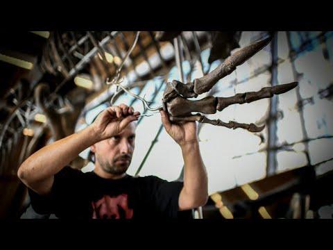 Rare dinosaur skeleton sells for €2 million at Eiffel Tower auction